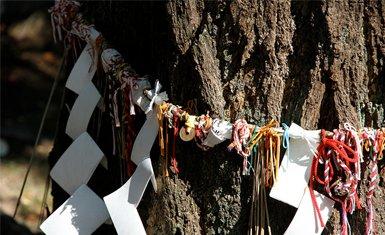árbol con shimenawa