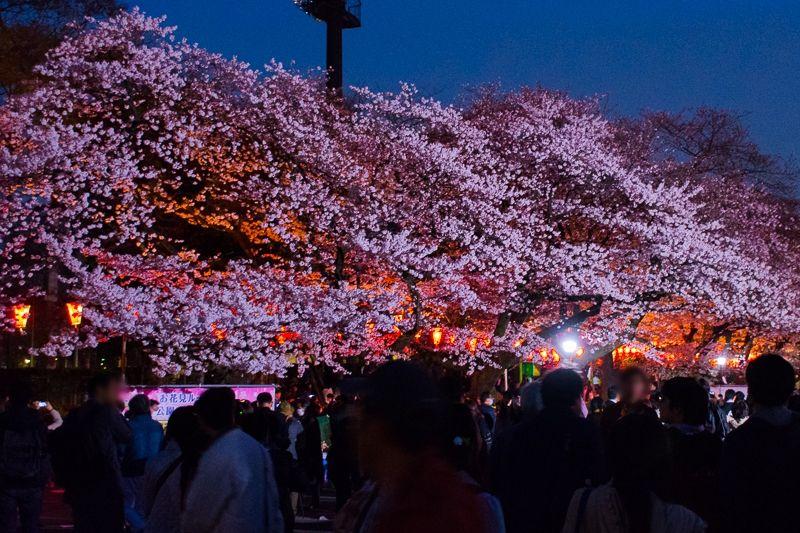 Parque Ueno durante el Hanami