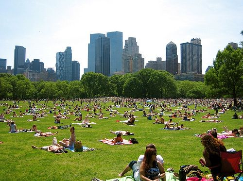 sheep-meadow