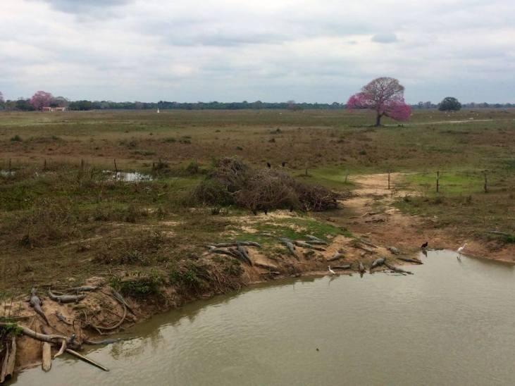 viajar al pantanal de Brasil - caimanes