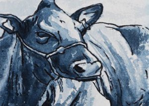 animal-portraits-croyde-north-devon-cow-1