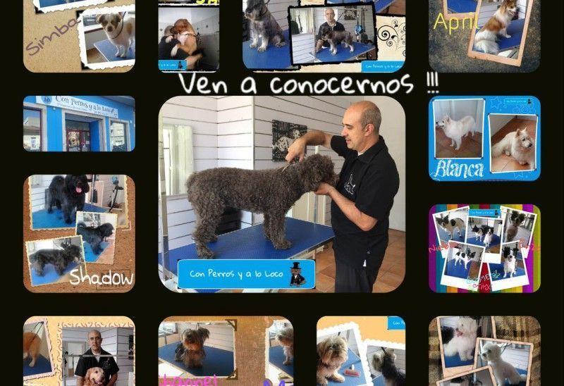 collage de trabajos de peluquería canina