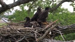 2017-05-23_arconic nest