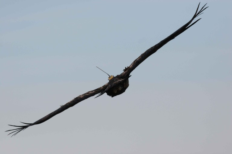 Flament_eagle flying with telemetry_00000025_small