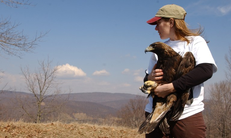 Trish Miller looks in the direction she believes the golden eagle will fly, from the top of New Creek Mountain in West Virginia, just prior to the bird;s release back into the wild, Thursday, March 22nd, 2007.