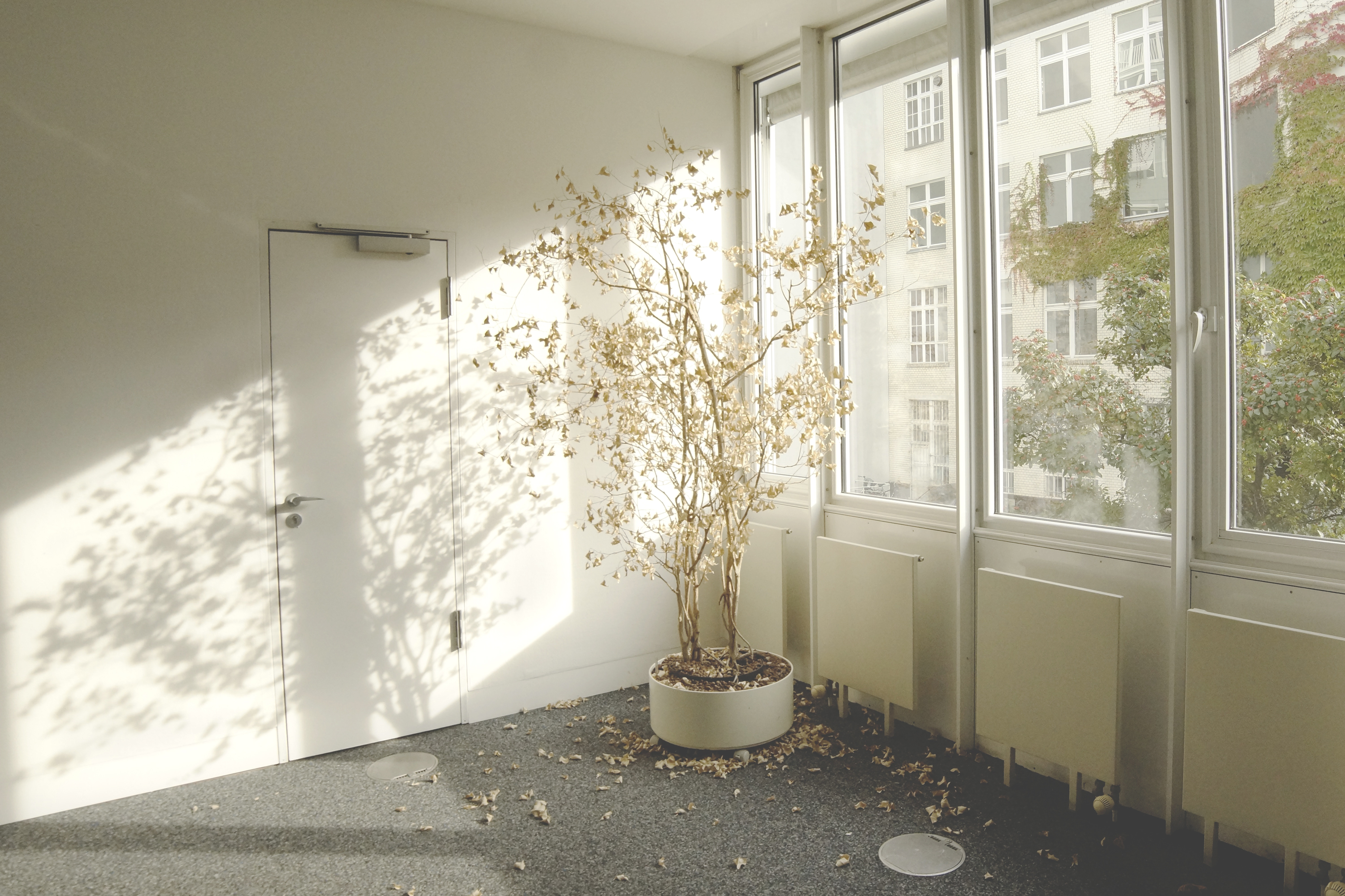 a plant left to wither in a business as usual office