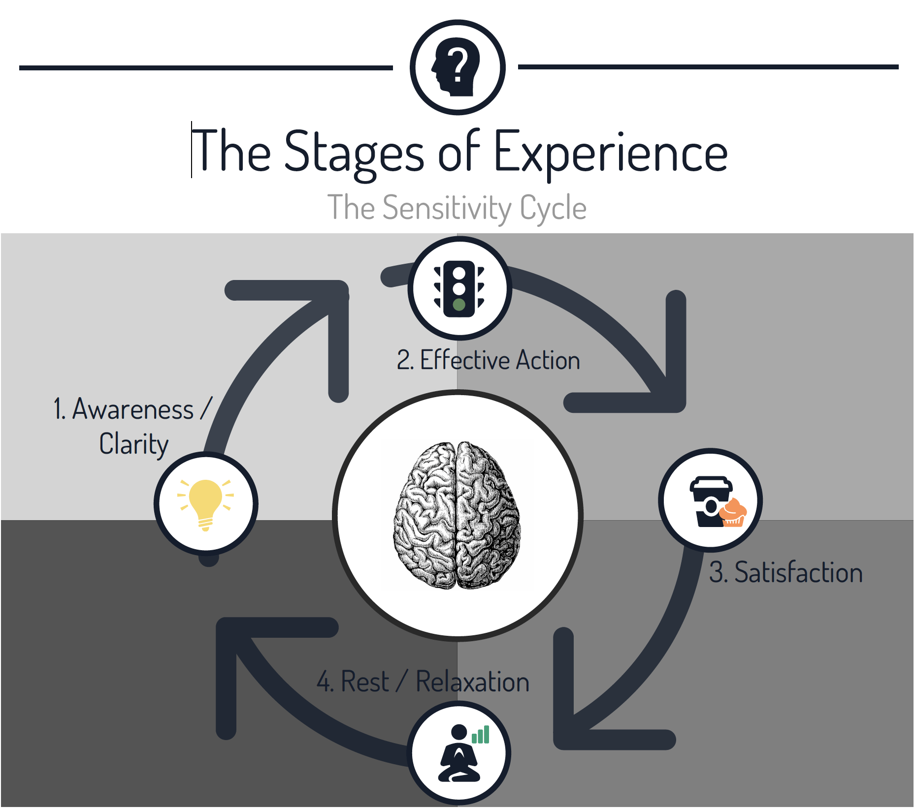The Sensitivity Cycle Hakomi Method Stages of Experience