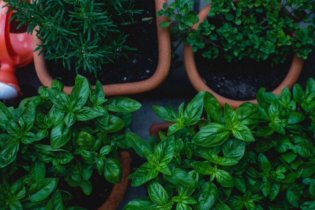 How to be a social activist at work | growing pots of herbs