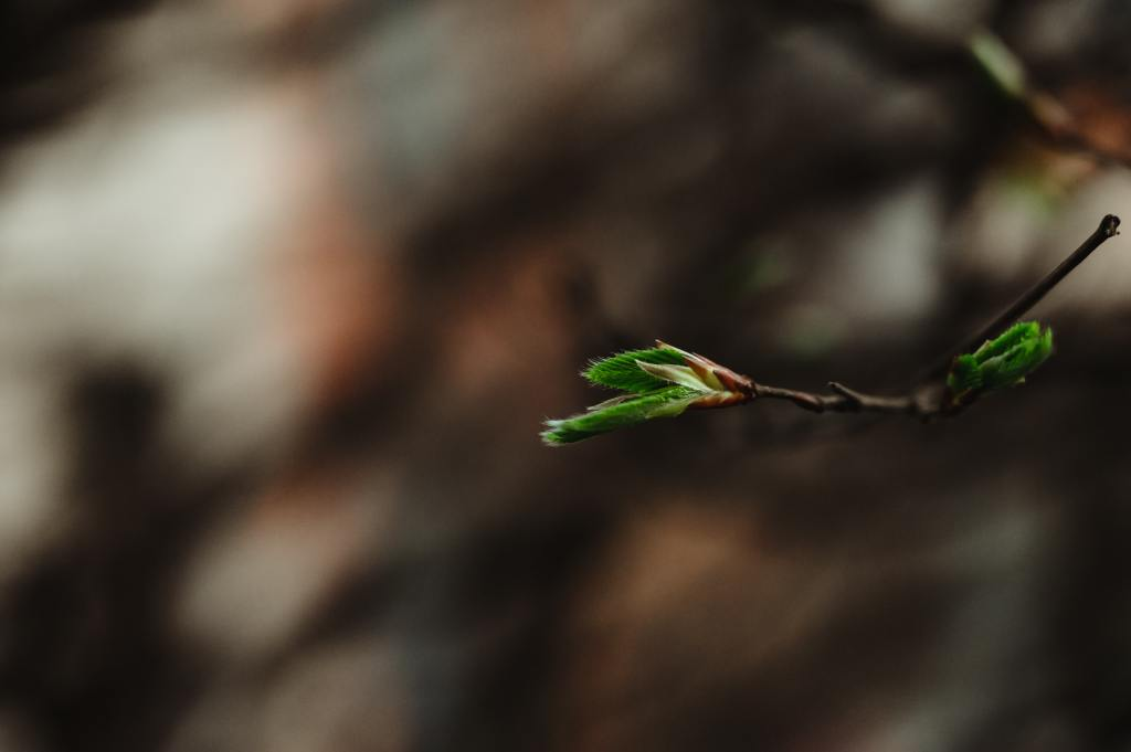 New leaves stretch out from buds on a tree branch | Spring seasonal junction rebirth | Conscious Content