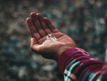 Person of color holding seeds in their left hand | Water every living seed contemplative mindfulness daily practice | Conscious Content