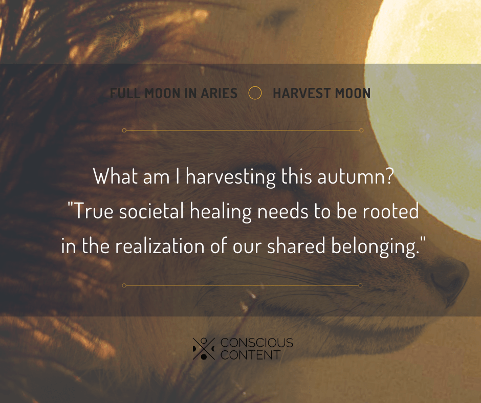 Red fox in field under full harvest moon | belonging to heal | Conscious Content
