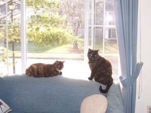 window-watching-001