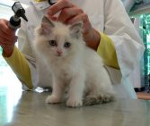 kitten at vet