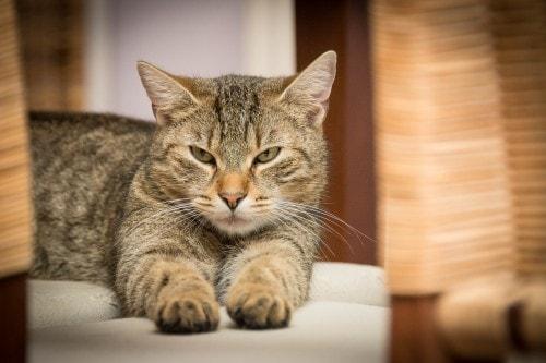 cat-purr-healing
