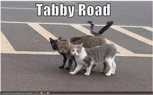 tabby road