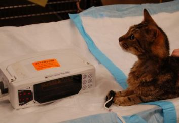 kitty with pulse oximeter