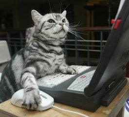 cat-on-computer