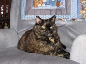 tortoiseshell_cat_on_chair