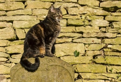 cat_on_grave_cemetery