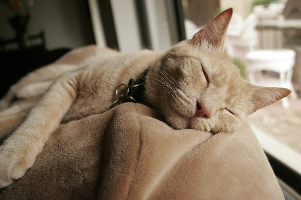 https://i0.wp.com/consciouscat.net/wp-content/uploads/2010/11/old-cat-sleeping.jpg