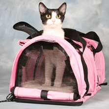 soft-sided-cat-carrier