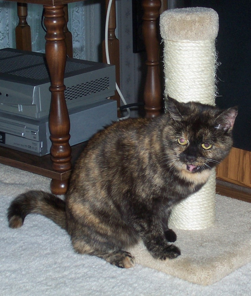 Cat Scratching Solutions, And A Giveaway To Help