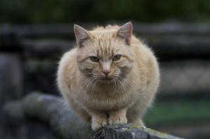 Natural Furball Remedy For Cats