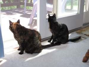 Amber and Allegra birdwatching