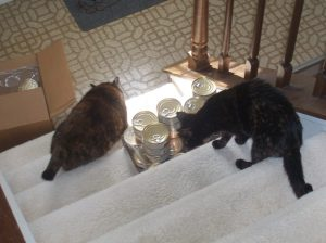 Amber and Allegra opening case of cat food