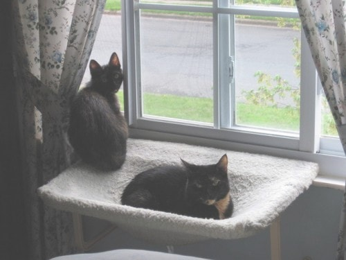 new-cat-introductions