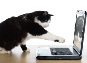 cat with computer, The Conscious Cat