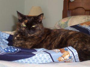 Amber The Conscious Cat