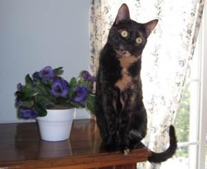 Allegra The Conscious Cat