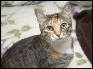 Kitten Associates Mazie