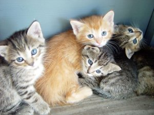 claim kittens as dependents?