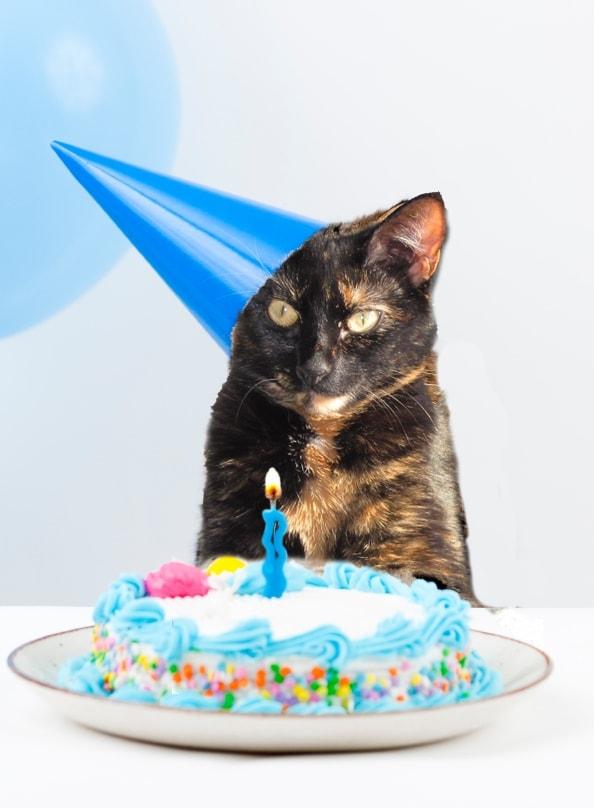 Allegras World Birthday Celebration