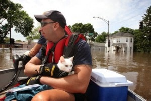 cat flooding boat evacuation