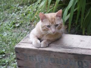 cat box grass yard