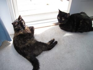 two cats in the sun