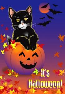 Halloween cat pumpkin