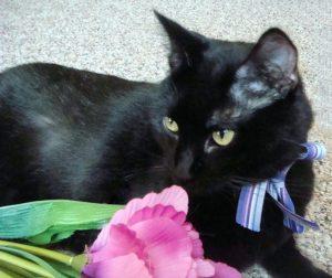Forever Feline Ranch black cat FIV+