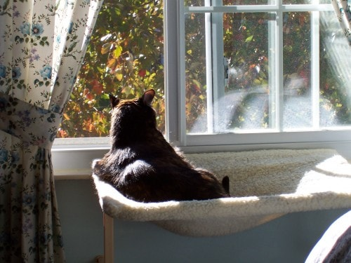 cat on window perch fall leaves