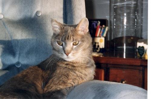 Feebee cat in blue chair