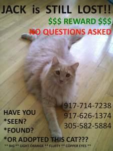 Jack the Cat missing at JFK Airport