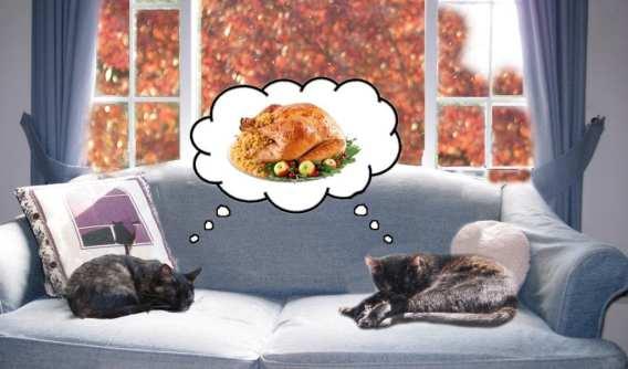 Thanksgiving cats turkey cute