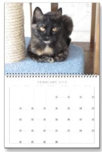 The Conscious Cat 2012 Wall Calendar