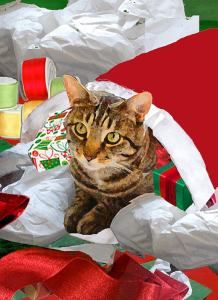 Deborah Julian cat Christmas card