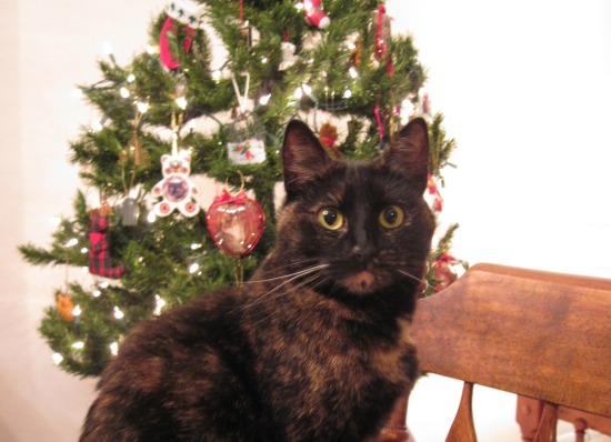 Rubyu0027s Reflections: Putting Up The Christmas Tree · Christmas Cat