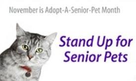 senior cats make great pets