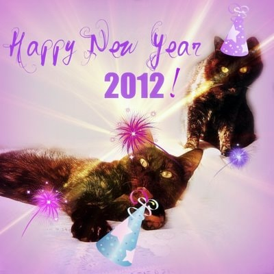 party-cats-happy-New-Year